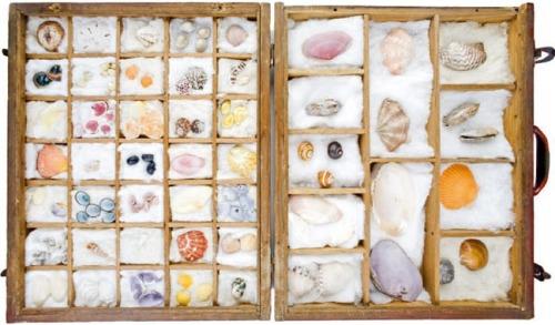 nerudas-seashells